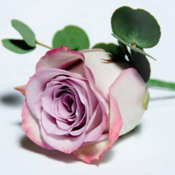 Floral buttonholes